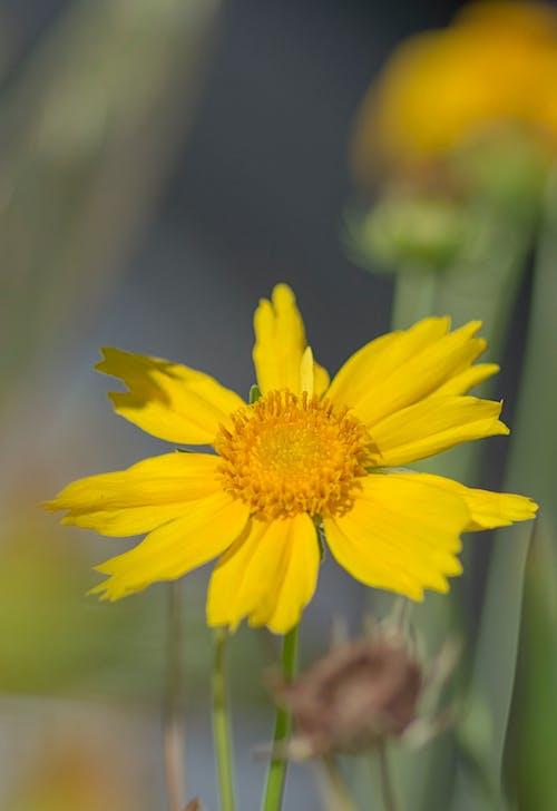 Foto profissional grátis de flor amarela, flor silvestre