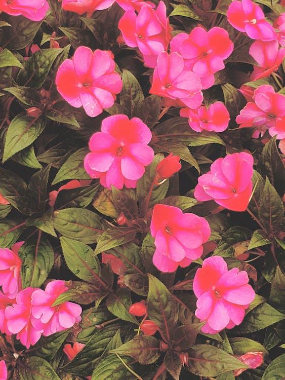 fürt, gyönyörű virágok, iphone-háttérkép