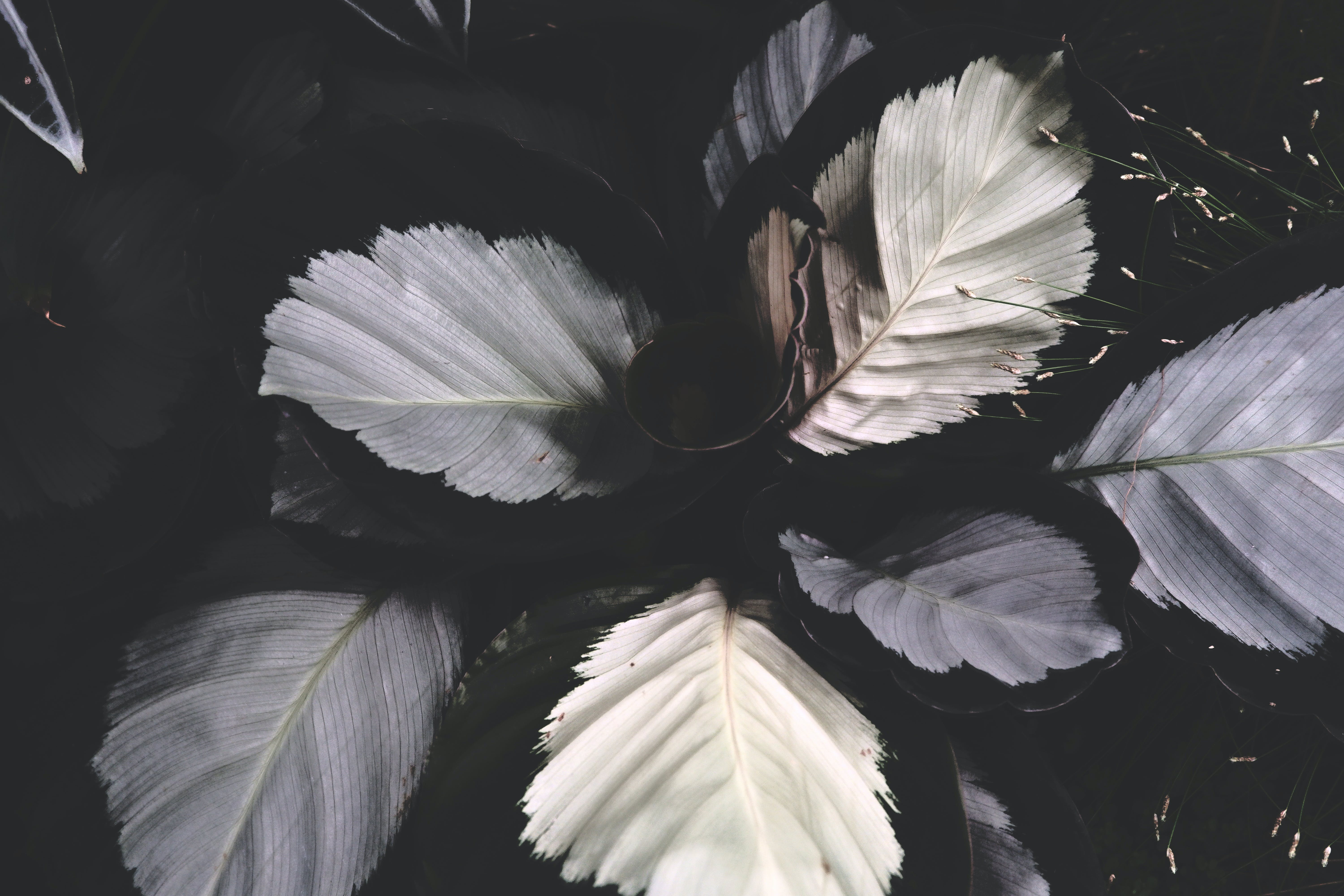 White and Grey Leaves