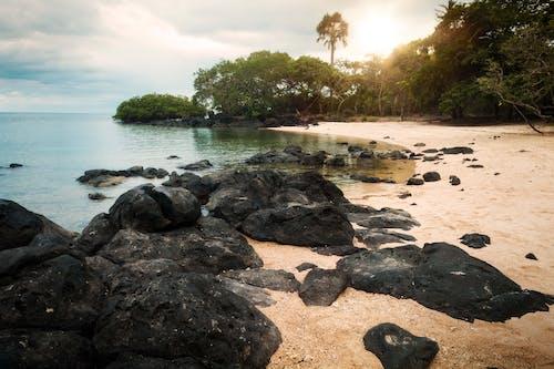 Gratis stockfoto met blikveld, bomen, golven, h2o