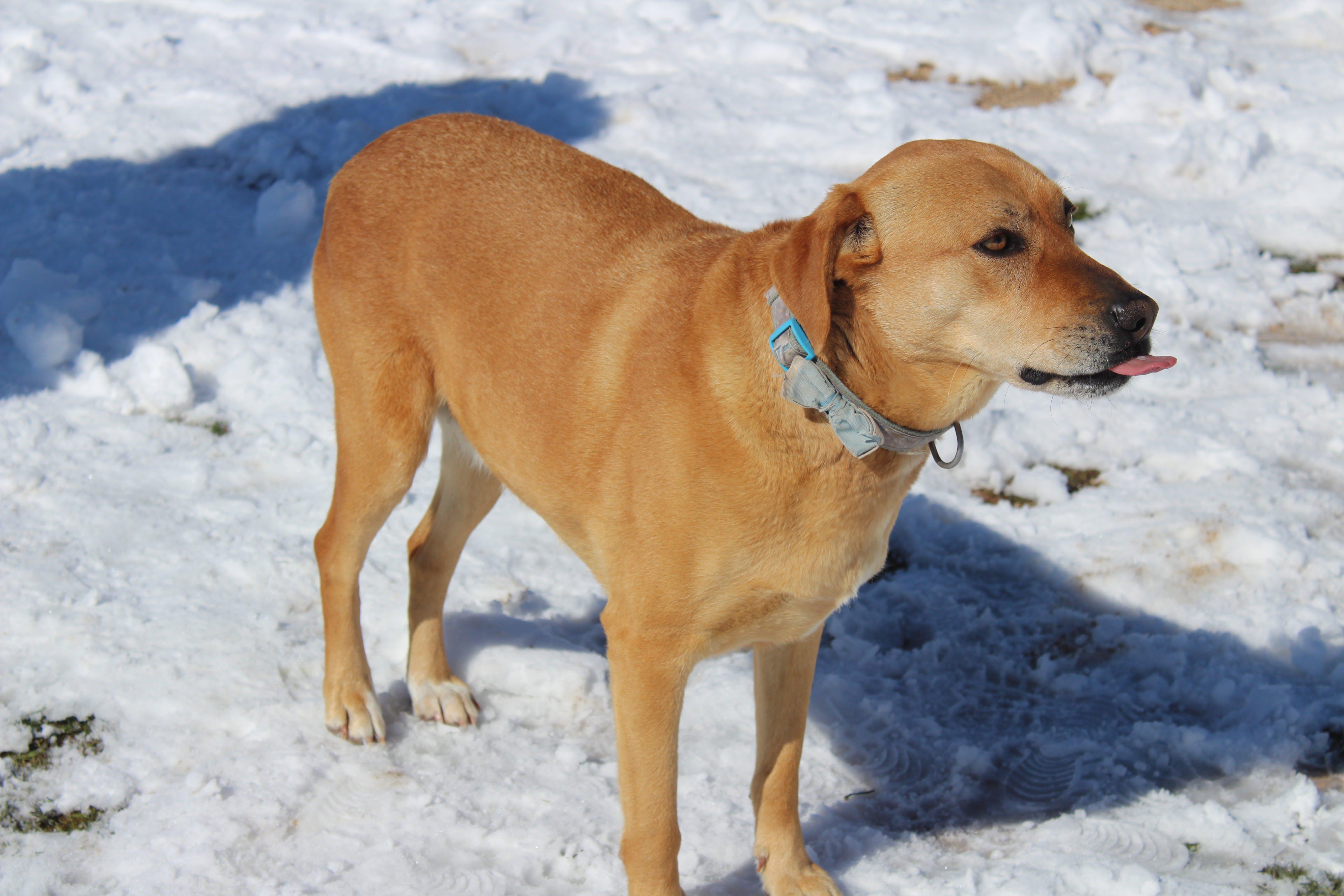 Free stock photo of dog, ice, pet, snow