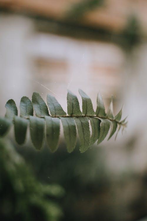 Бесплатное стоковое фото с зеленый, красивый, максросъемка, папоротник