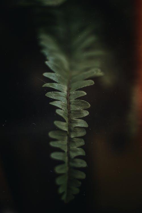 close-up, depth of field, detailopname