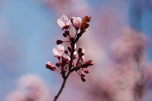 フラワーズ, 木, 青の無料の写真素材