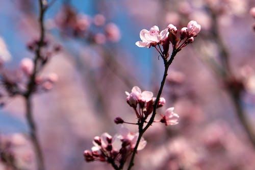 フラワーズ, 木, 美しい, 色の無料の写真素材