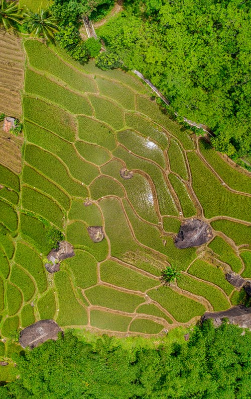 Bird's Eye View Photography Of Rice Terraces