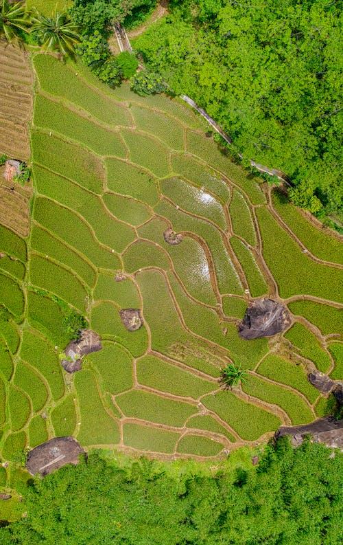 Imagine de stoc gratuită din câmp, culturi, fermă, fotografie cu drona