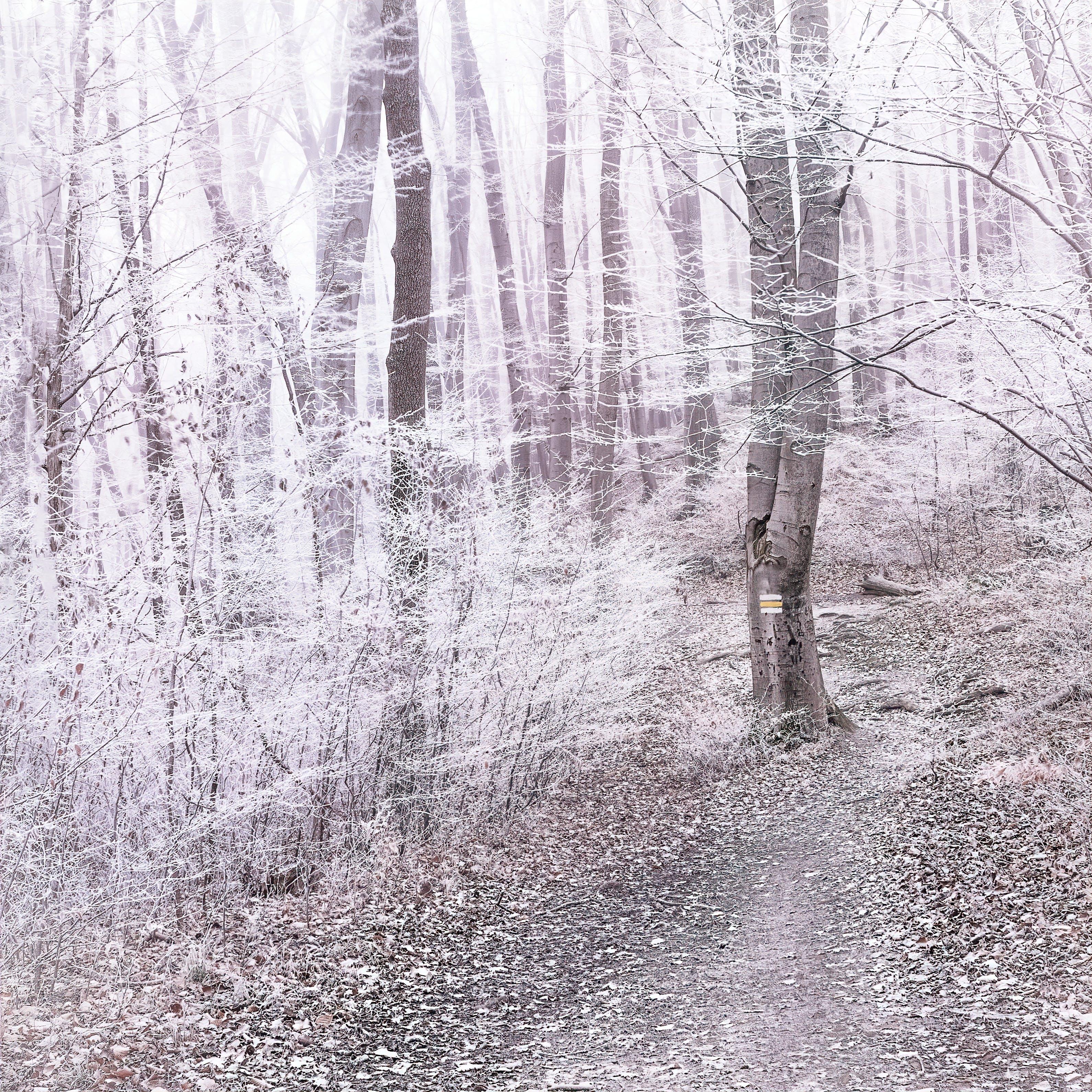 冬季, 冷, 冷冰的, 原本 的 免费素材照片
