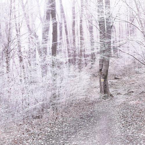 Photos gratuites de autriche, bois, chemin, forêt