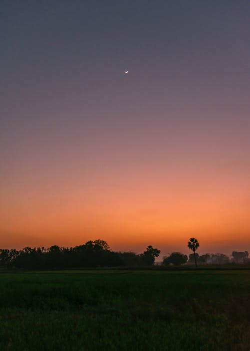 Ảnh lưu trữ miễn phí về bầu trời buổi tối, bầu trời đỏ, mặt trăng, màu xanh lá