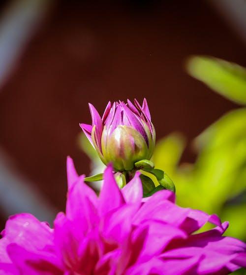 Ảnh lưu trữ miễn phí về Hình nền 4k, hình nền hoa, hình nền điện thoại di động, hoa cúc tím