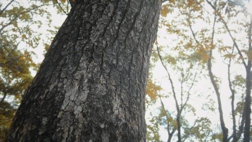 Photos gratuites de arbre, bois, forêt