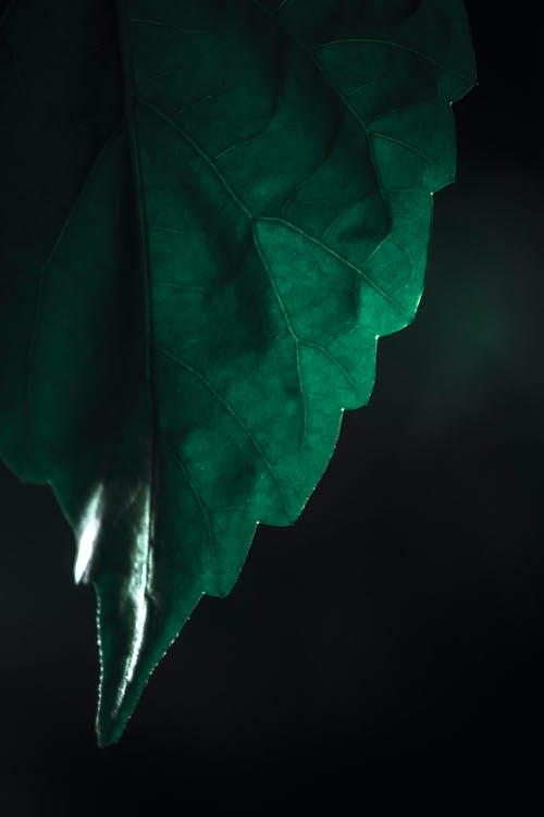 Foto profissional grátis de close, ecológico, luminescência, macro