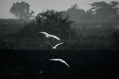 Gratis stockfoto met #vogels vliegen