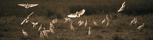 #鳥達は飛ぶの無料の写真素材