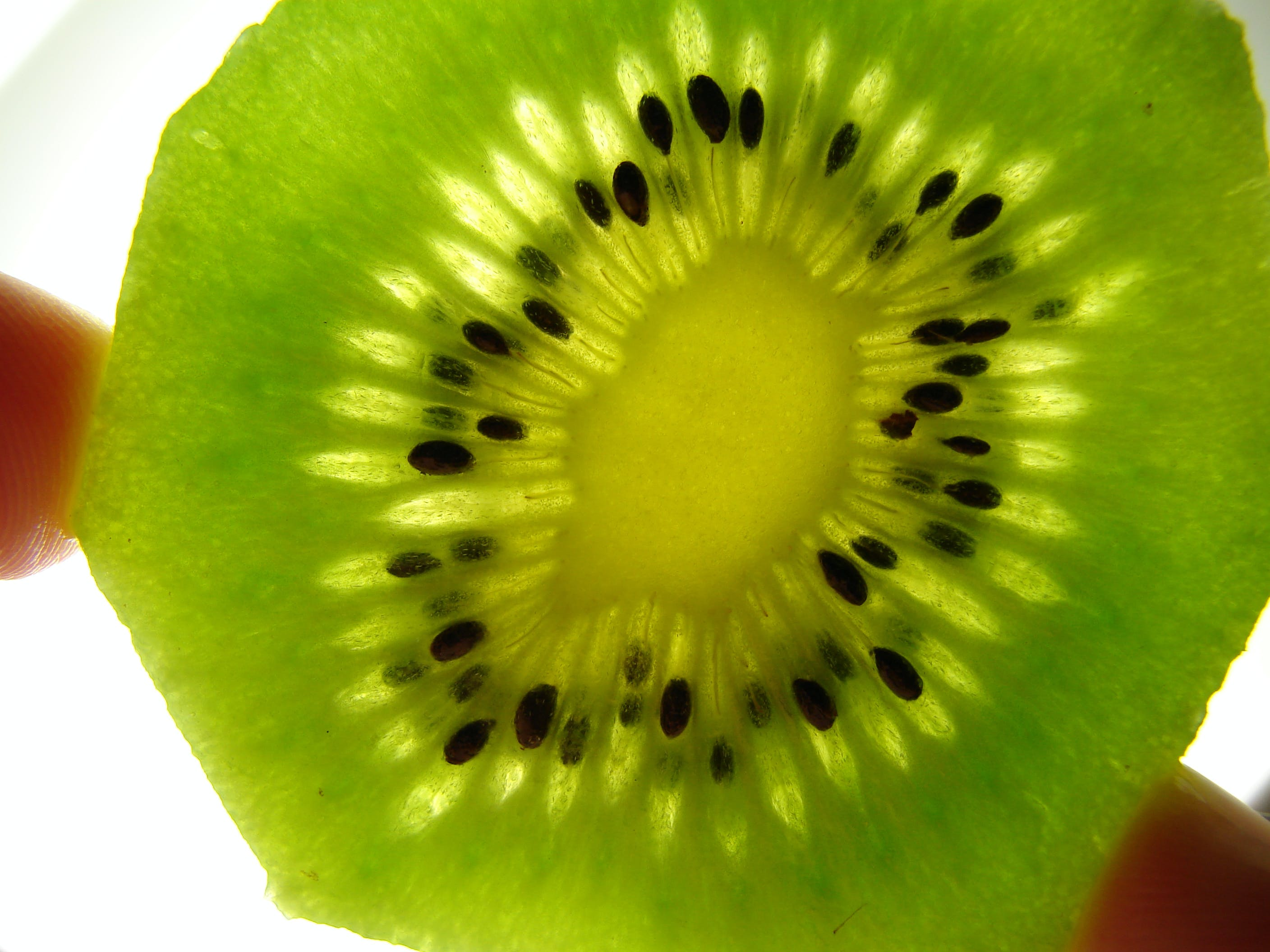 Free stock photo of close-up view, macro, fruit, kiwi