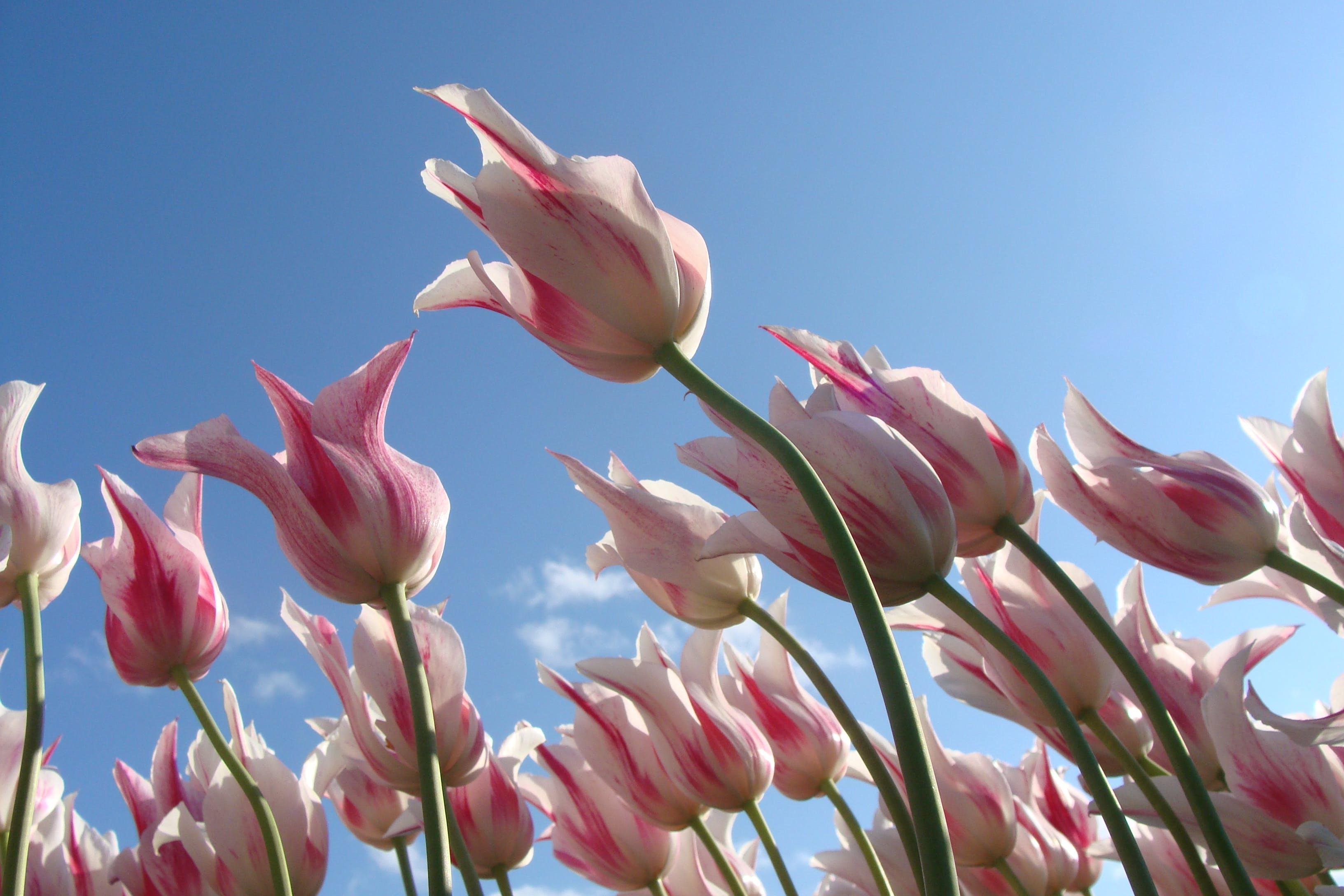 flowers, pink, sky