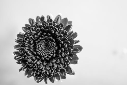 Grayscale Photography of Cluster Petaled Flower