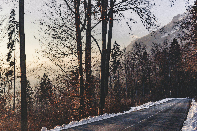 Gratis stockfoto met begeleiding, berg, bevroren, Bos