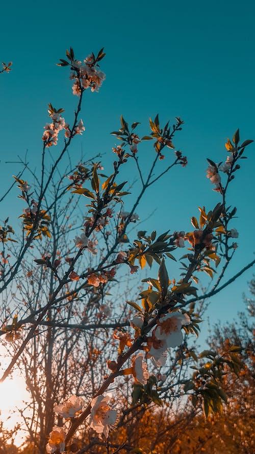 Photos gratuites de #fond d'écran, nature