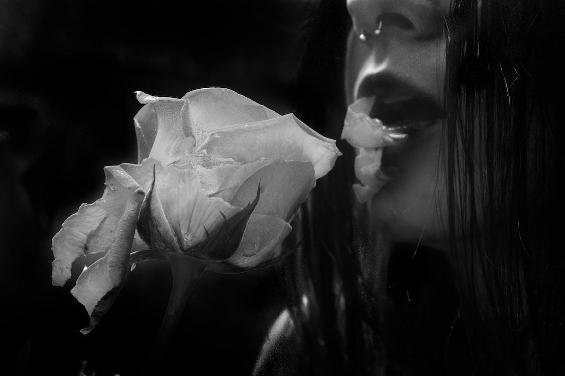 blomst, blomster, hvid rose