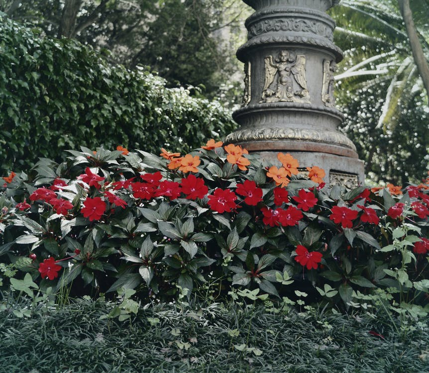 경치, 경치가 좋은, 꽃