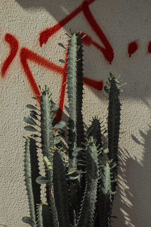Green Cactus Plants Beside White Wall