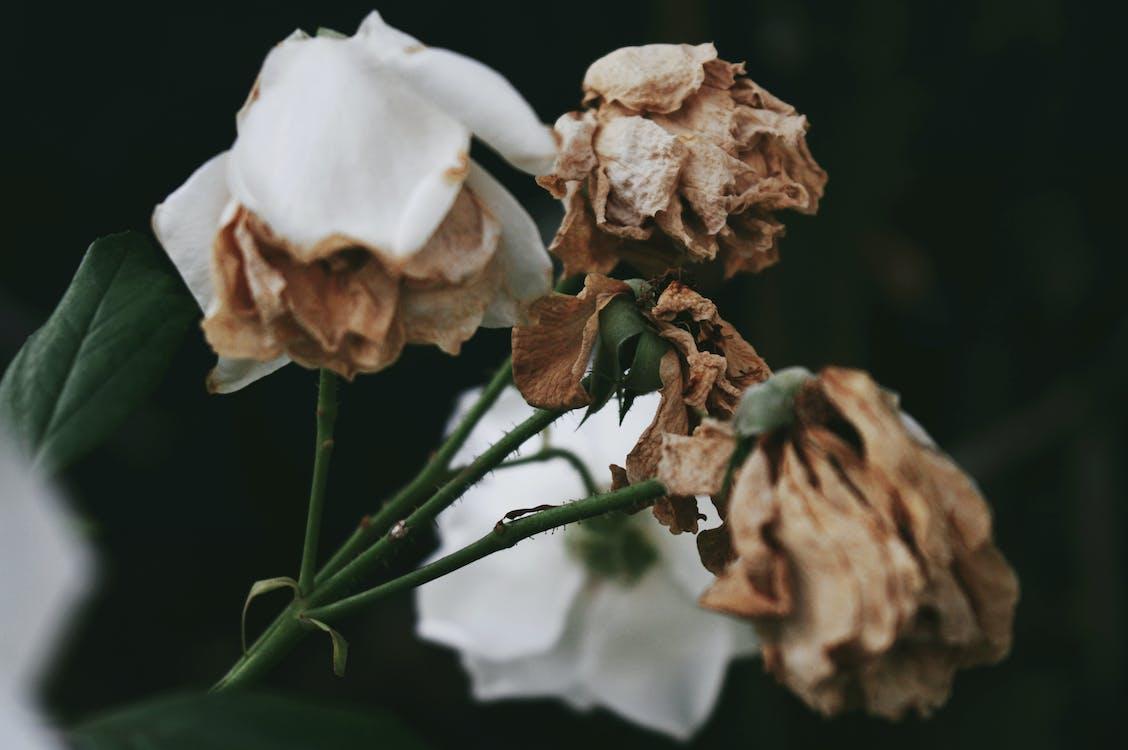 blomster, close-up, nærbillede