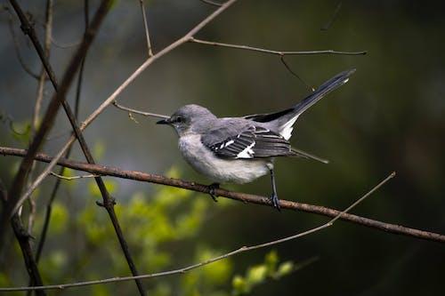 Foto d'estoc gratuïta de animal, natura, ocell petit
