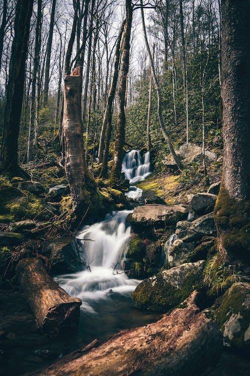 kaskáda, les, lesy