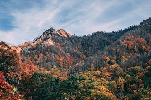 Foto d'estoc gratuïta de arbres, bosc, muntanya, muntanyes