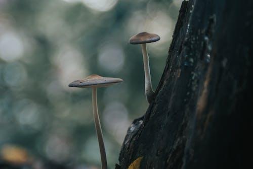 Безкоштовне стокове фото на тему «гриб, гриби, два, життя»