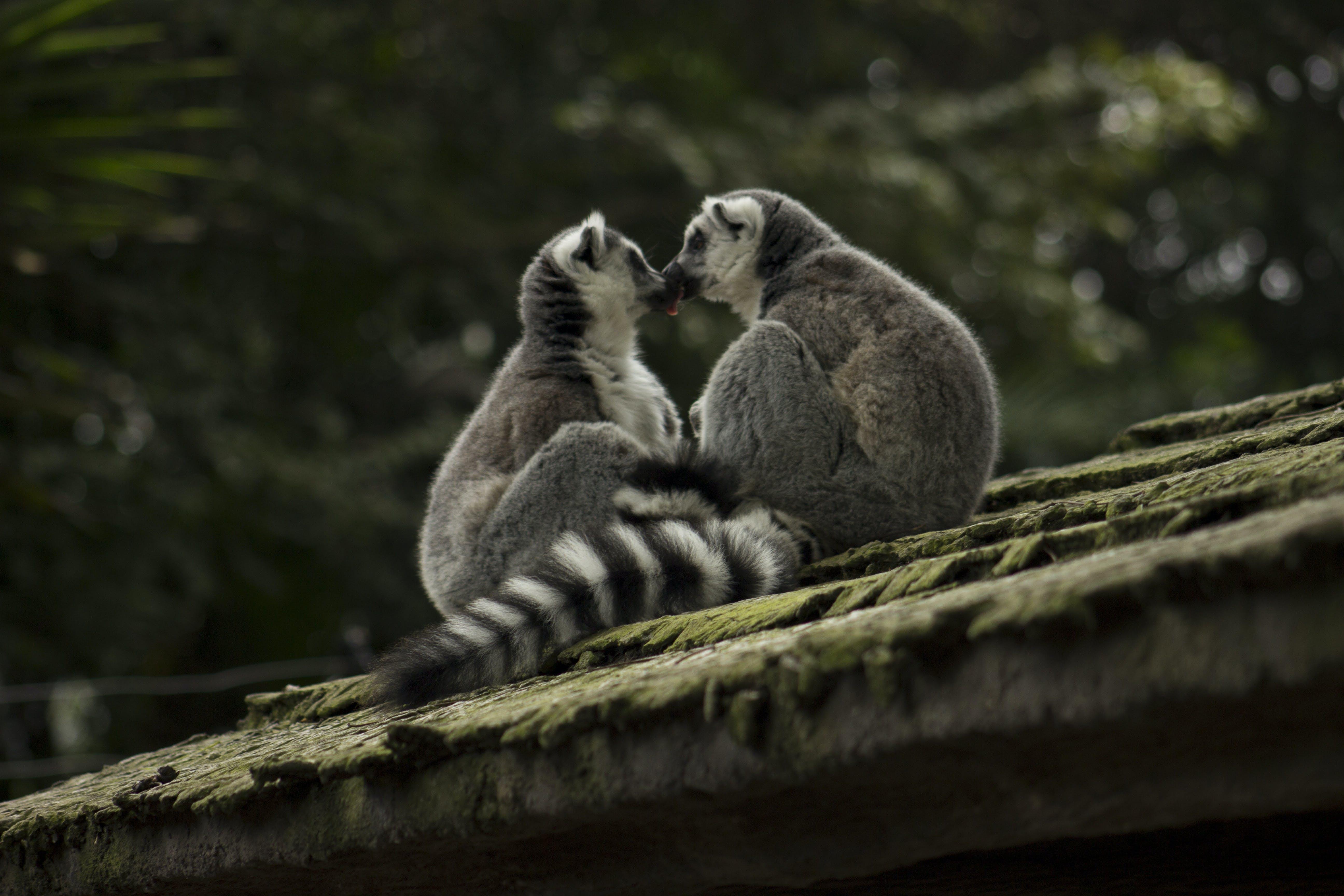 Darmowe zdjęcie z galerii z całowanie, dzika przyroda, dziki, futro