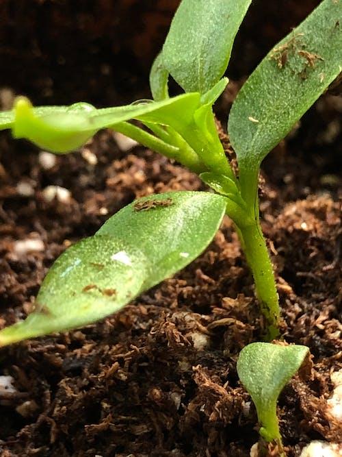 微距攝影, 深綠色的植物 的 免费素材照片