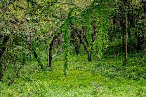 Gratis stockfoto met Bos, landschap, natuur