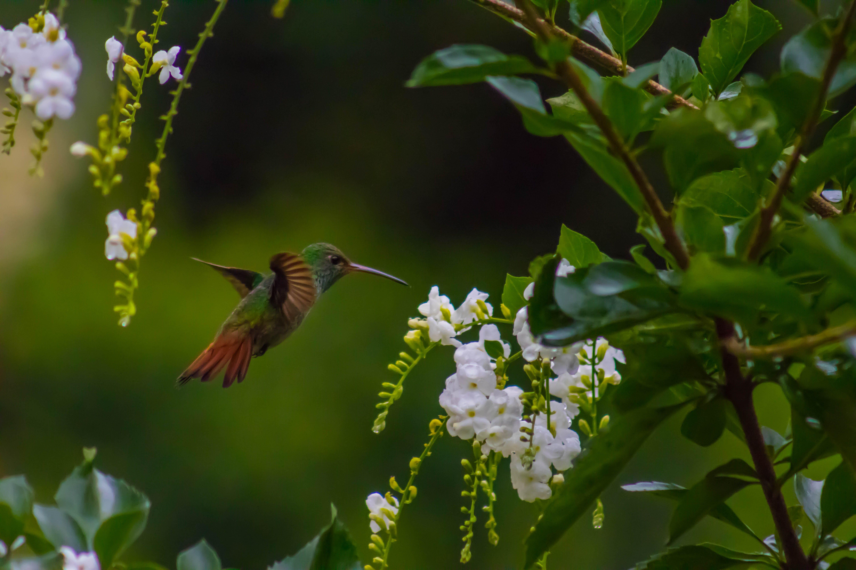 Kostenloses Stock Foto zu kolibri, natur, wildes tier