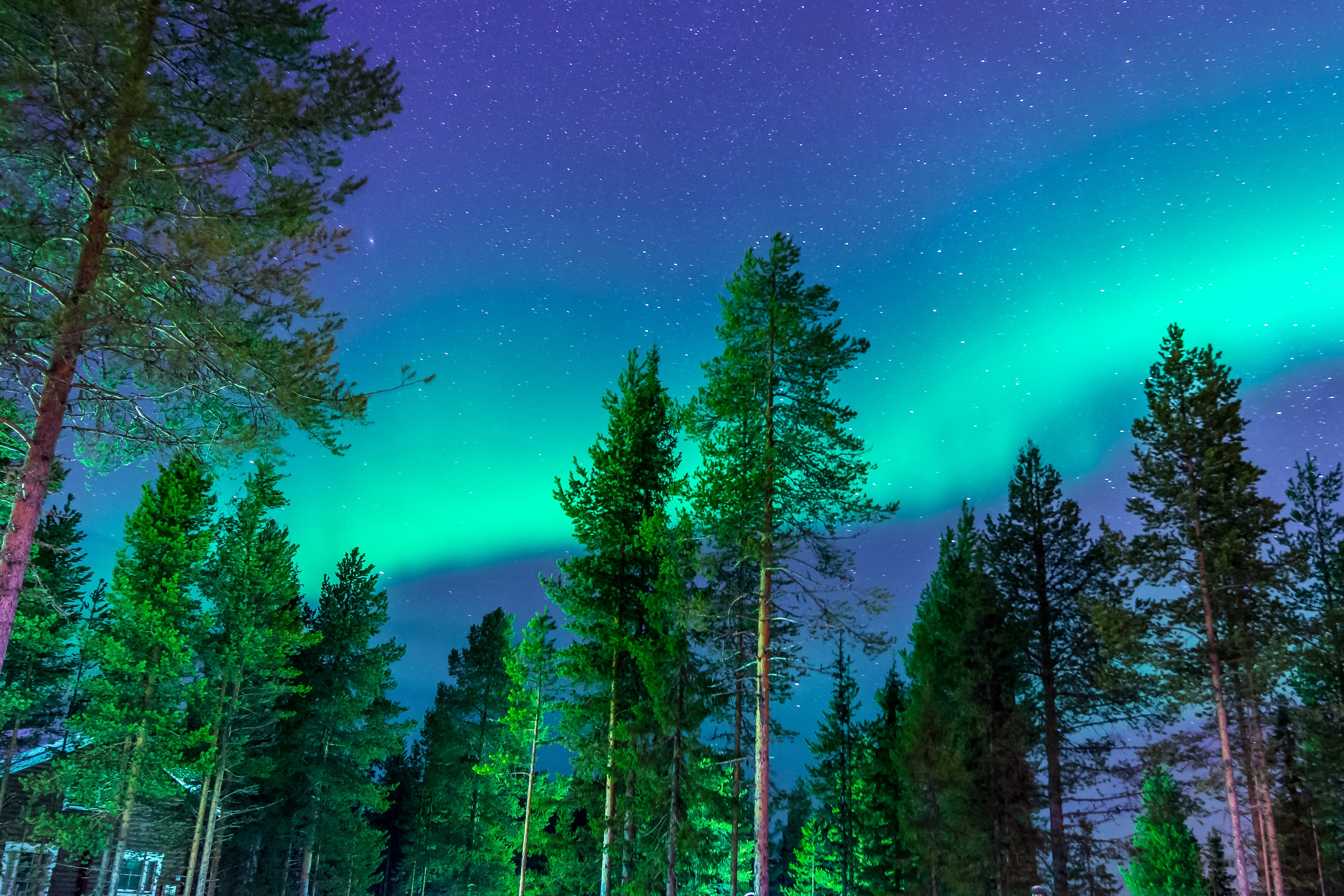 Kostenloses Stock Foto zu bäume, holz, landschaftlich, natur