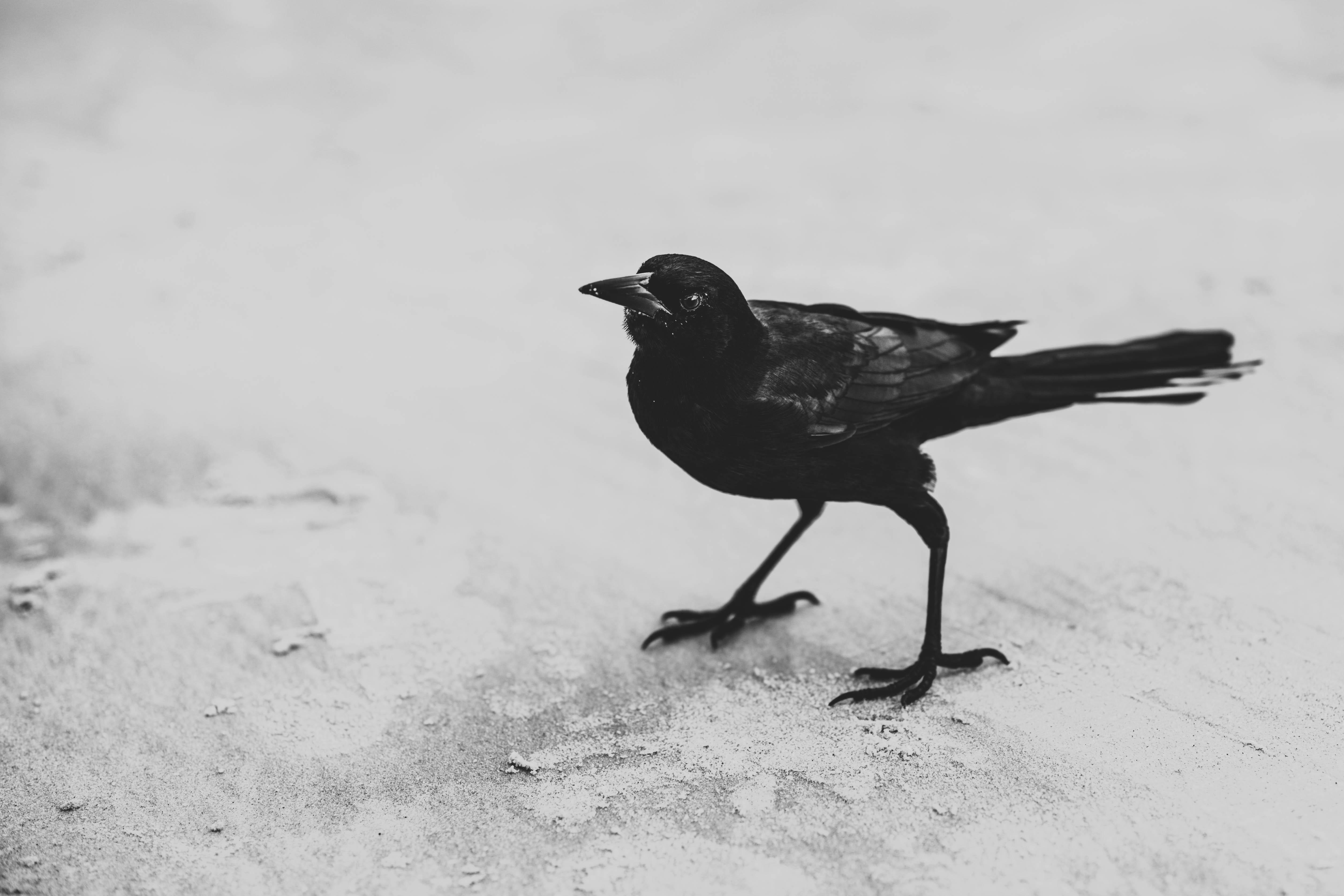μεγάλο μαύρο πουλί κοπή σεξ σκάνδαλο λεσβία