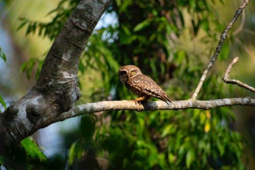 Immagine gratuita di albero, animale, appollaiato, fauna selvatica