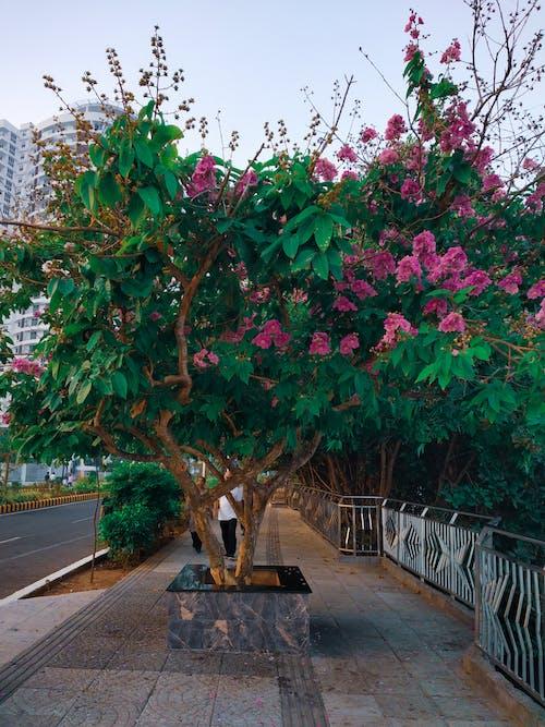 Foto d'estoc gratuïta de amor, arbre, bellesa a la natura, bonic