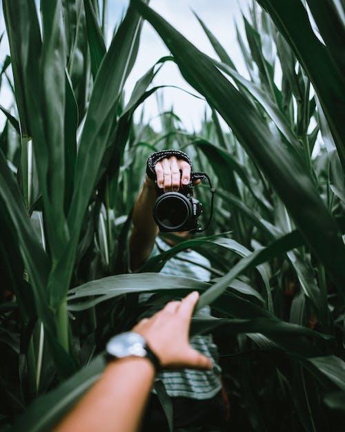 Základová fotografie zdarma na téma barva, denní světlo, farma, fotoaparát