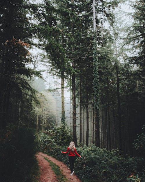Immagine gratuita di alberi, ambiente, boschi, camminando