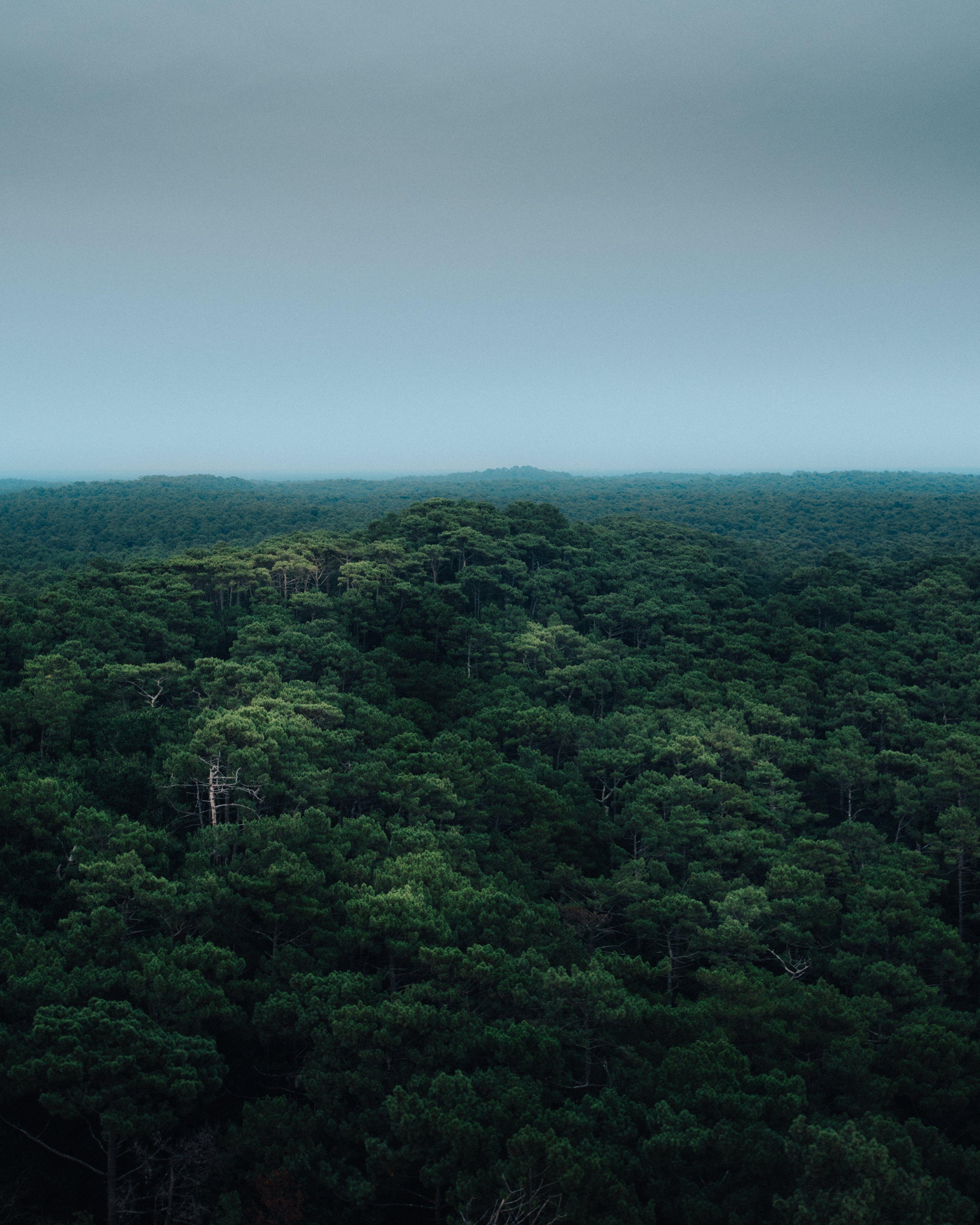 di alberi, boschi, da sopra, foresta