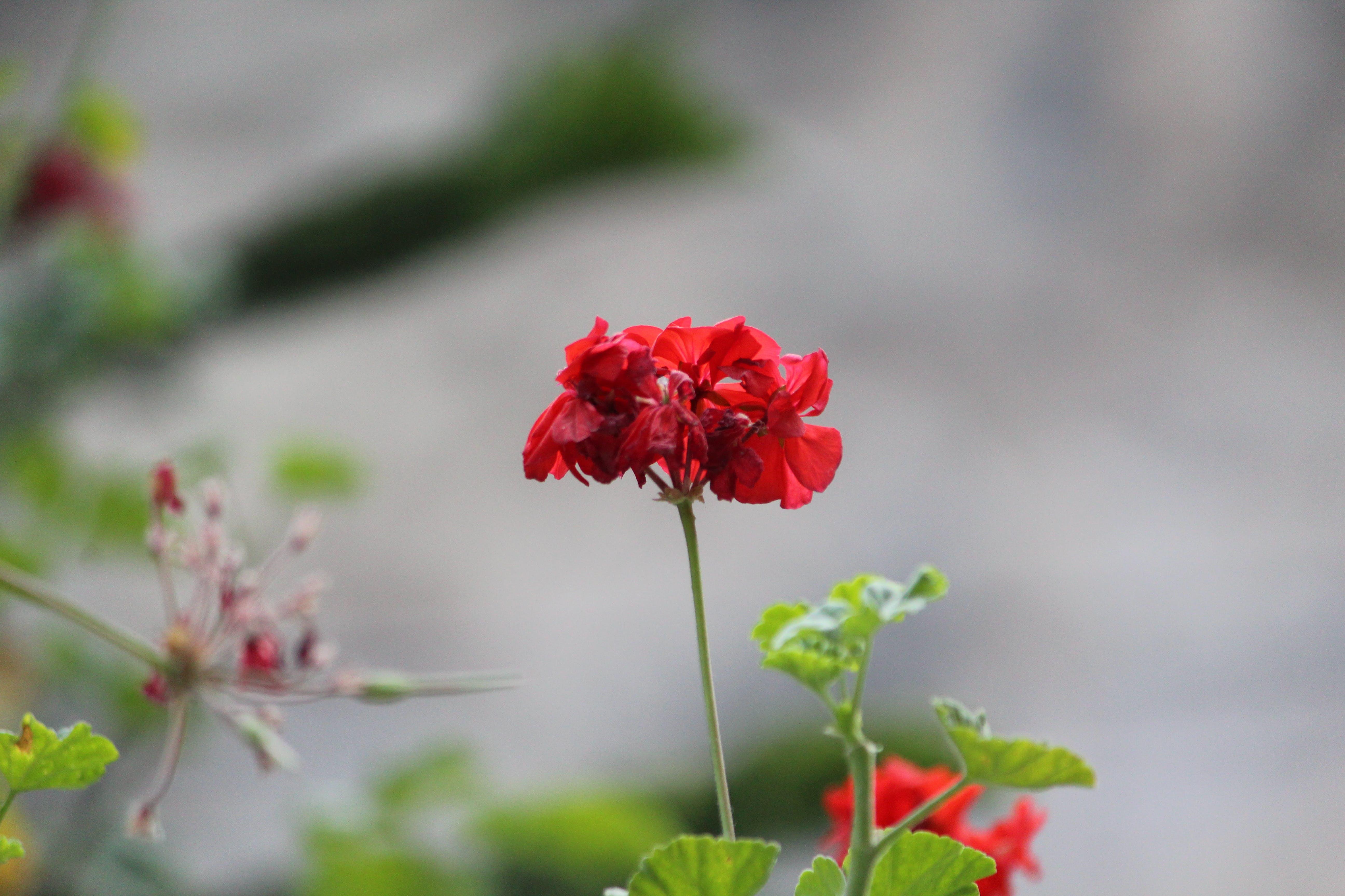 Gratis lagerfoto af blomstermark, skønhed i naturen, smuk blomst
