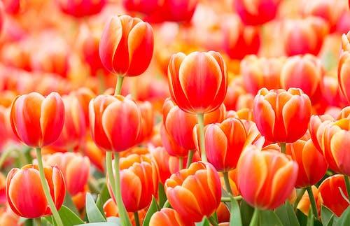คลังภาพถ่ายฟรี ของ กลีบดอกไม้, ก้านดอก, ขาว, ขึ้น