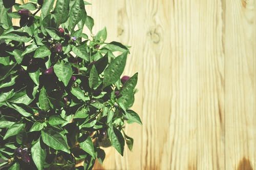 Δωρεάν στοκ φωτογραφιών με εργοστάσιο, ξύλο, φυτό