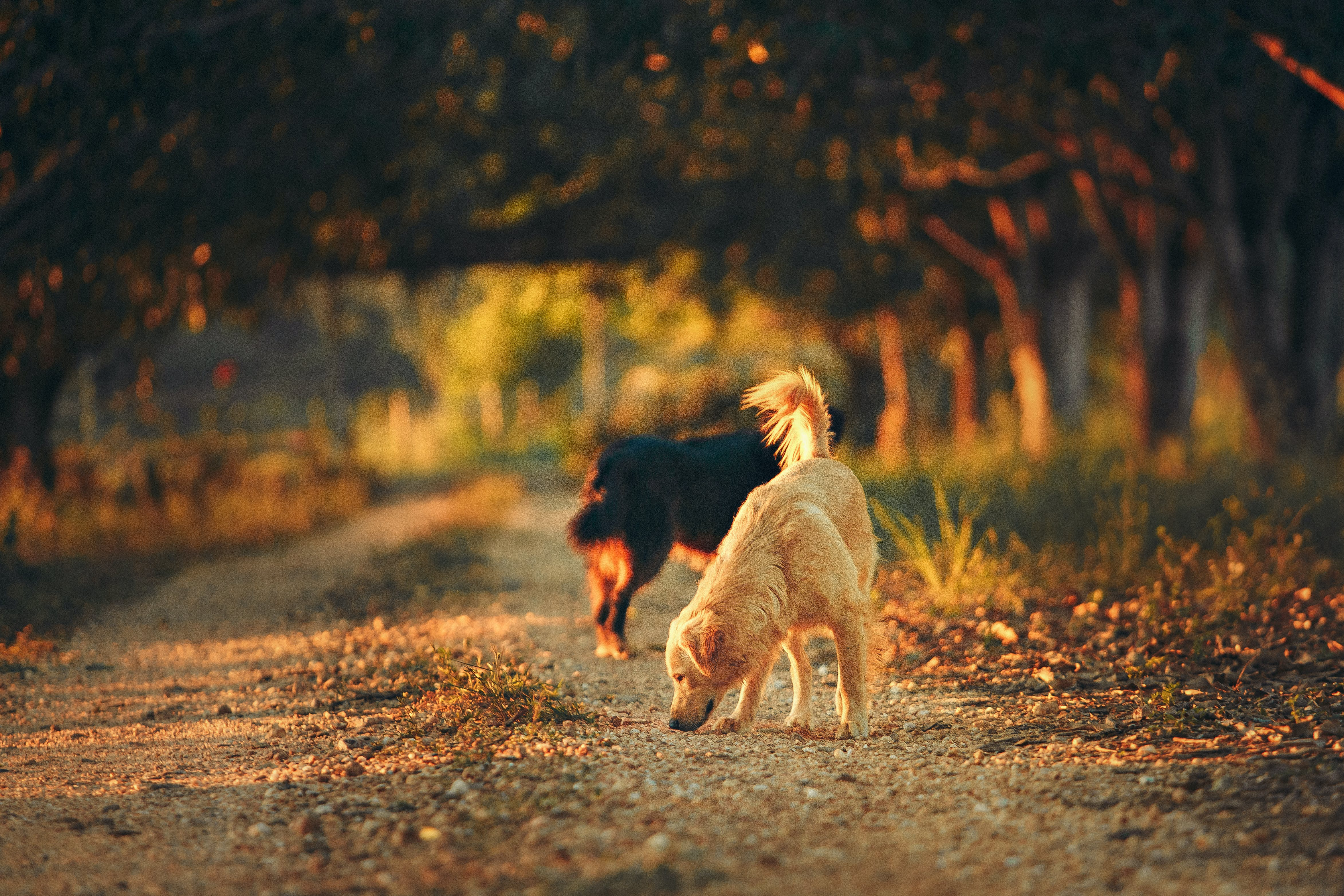 Selective Focus Photography of Two Dogs in the Middle of Road
