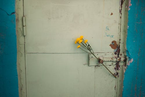 Free stock photo of door, flower
