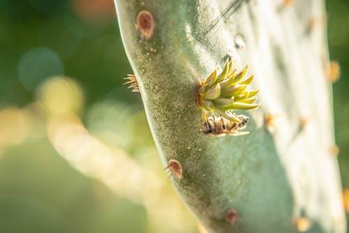 Ilmainen kuvapankkikuva tunnisteilla kaktus, kauneus luonnossa, mehiläinen