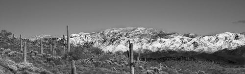 Free stock photo of arizona, black and white, cactus, desert